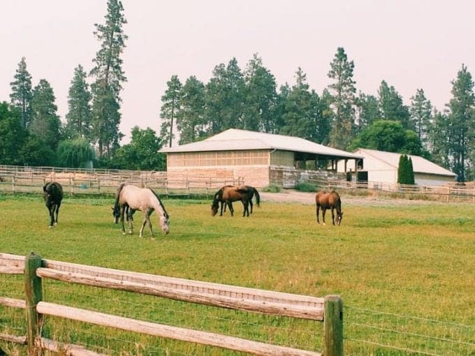Horses graze just feet from our RV parking spot at a Harvest Hosts RV membership location in Kelowna, BC, Canada