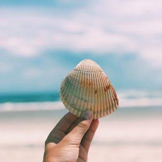 Emerald Isle Beaches: Visit The Point for Amazing Seashells