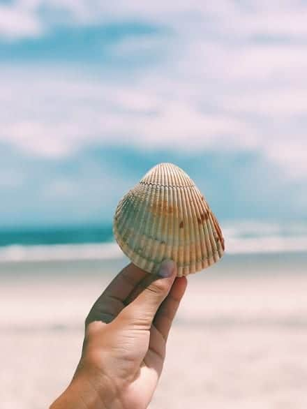 Emerald Isle Beaches - The Point is the best place to find seashells