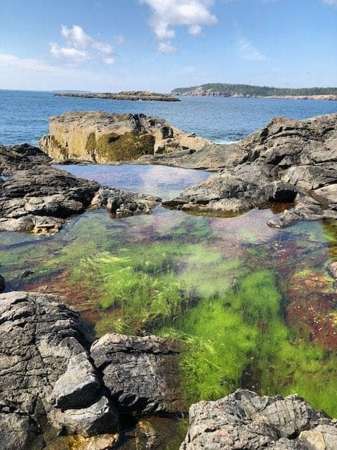 Great Head Loop Trail boasts some absolutely spectacular views of the ocean, but the tide pools are just as fascinating and will pull you right in.