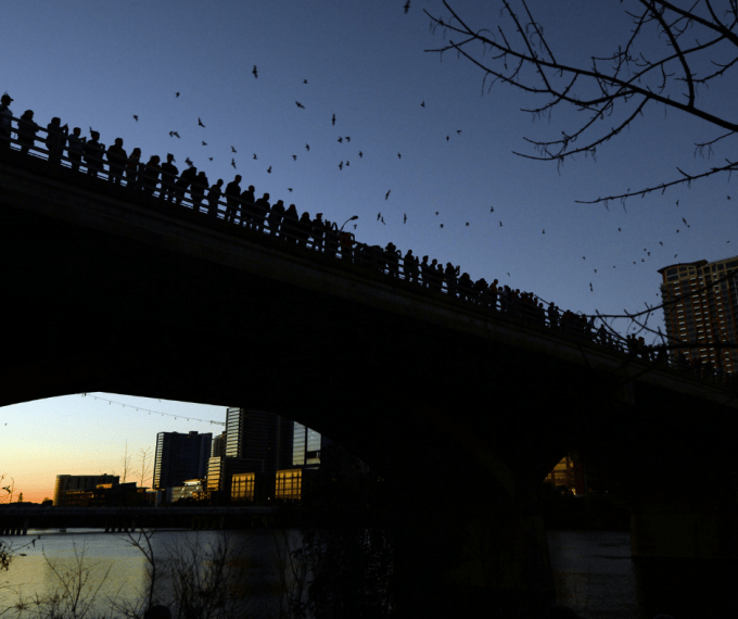 Congress Bridge Bats in Austin, TX