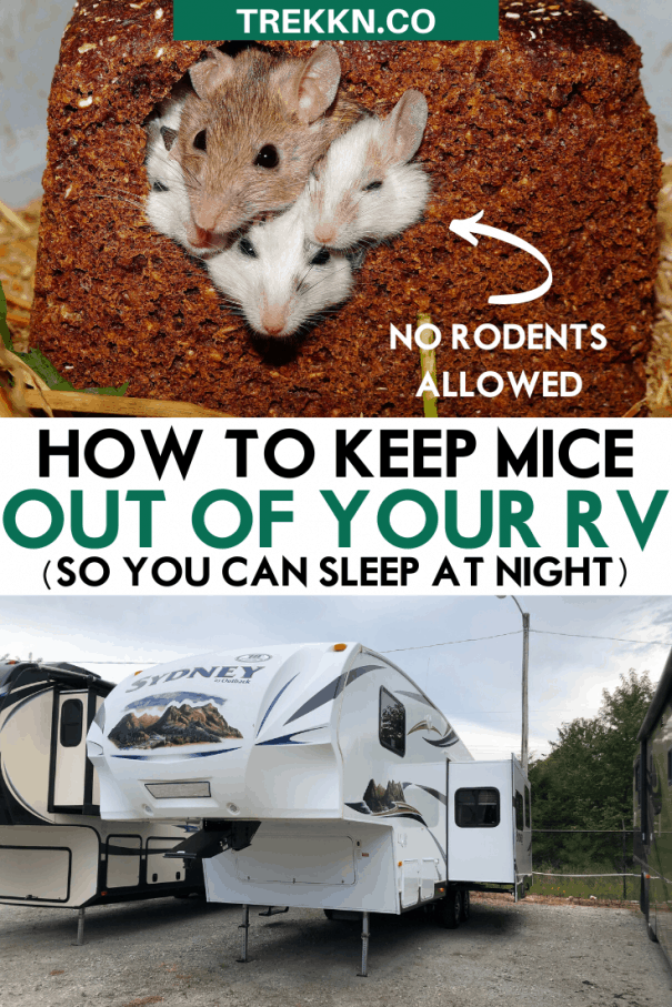Keeping Mice Out of Your RV