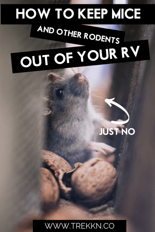 keeping mice out of your camper