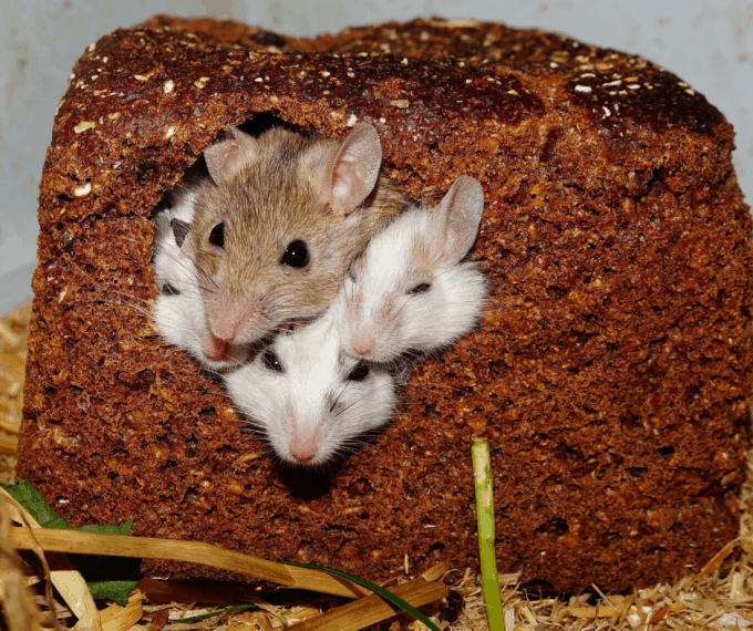 How to Keep Mice Out of Your RV So You Can Sleep Comfortably At Night