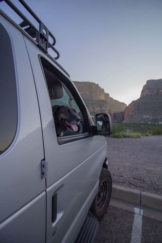 Dogs in Big Bend National park