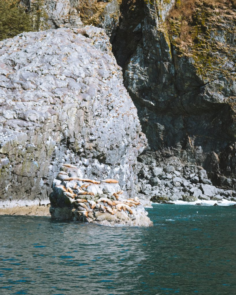 sea lions chilling out in seward alaska
