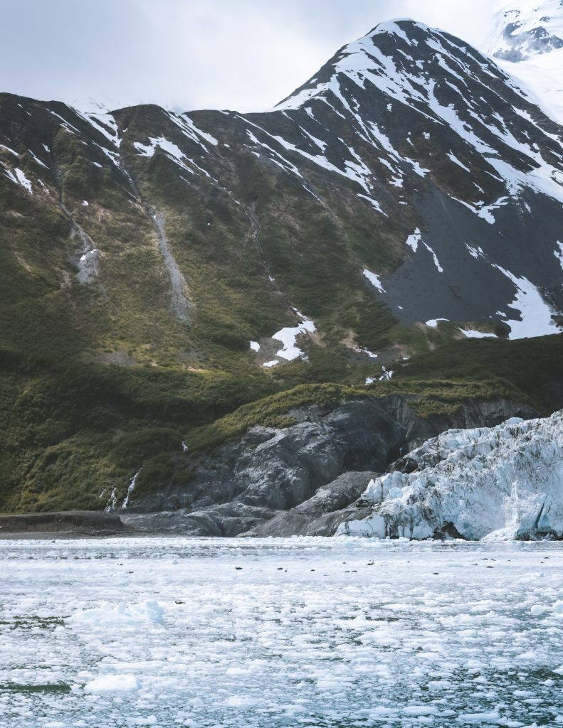 harbor seals laying on bergy bits in front of aialik glacier
