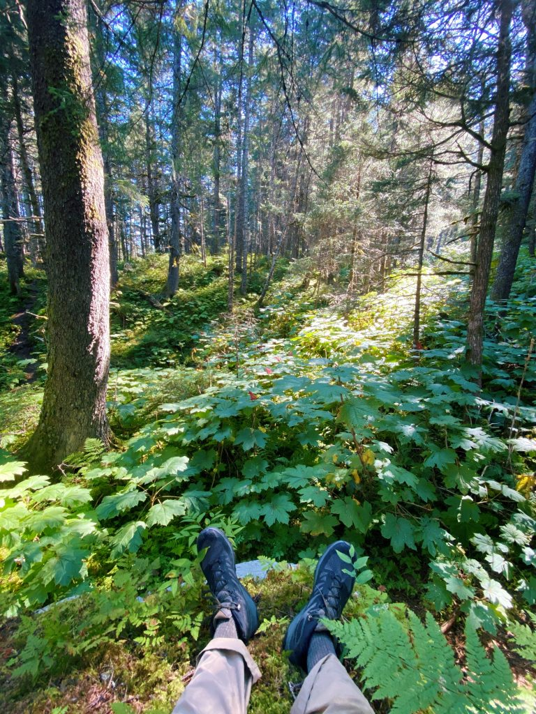 taking a moment on the trail in seward alaska