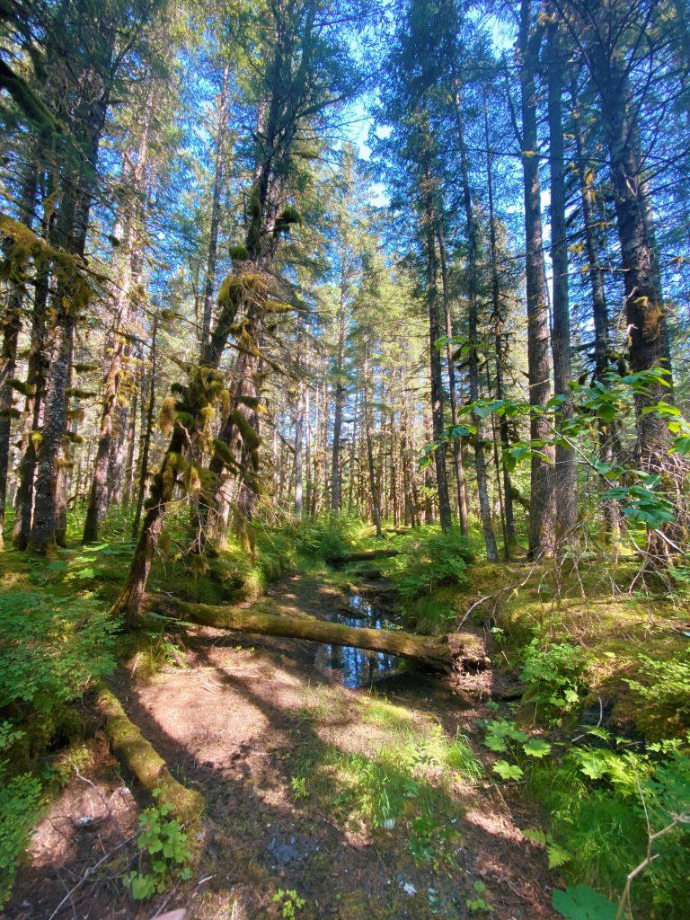 tonsina point trail