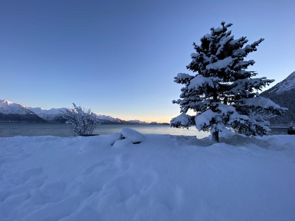a snow covered kenai fjords national park