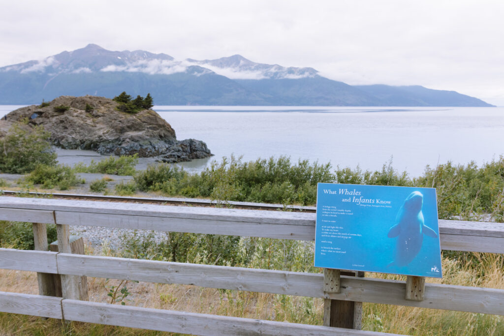 beluga point along the seward alaska highway
