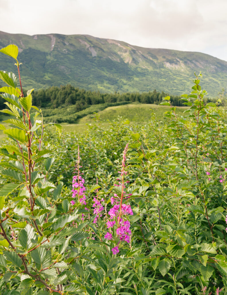 Johnson Pass in Alaska